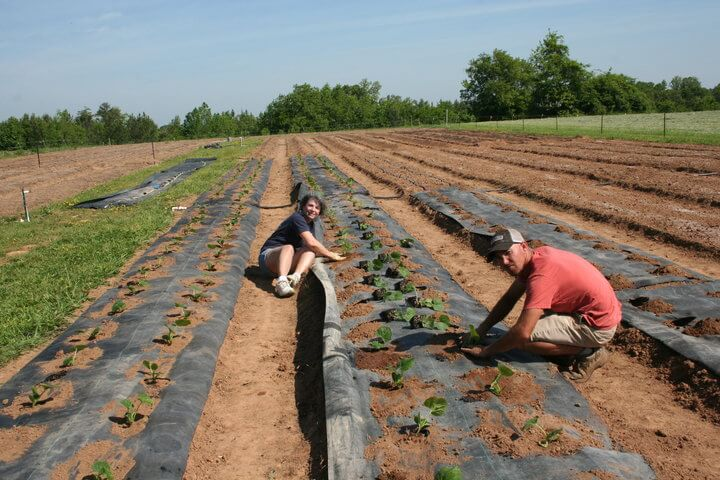 two people planting on shalom farms