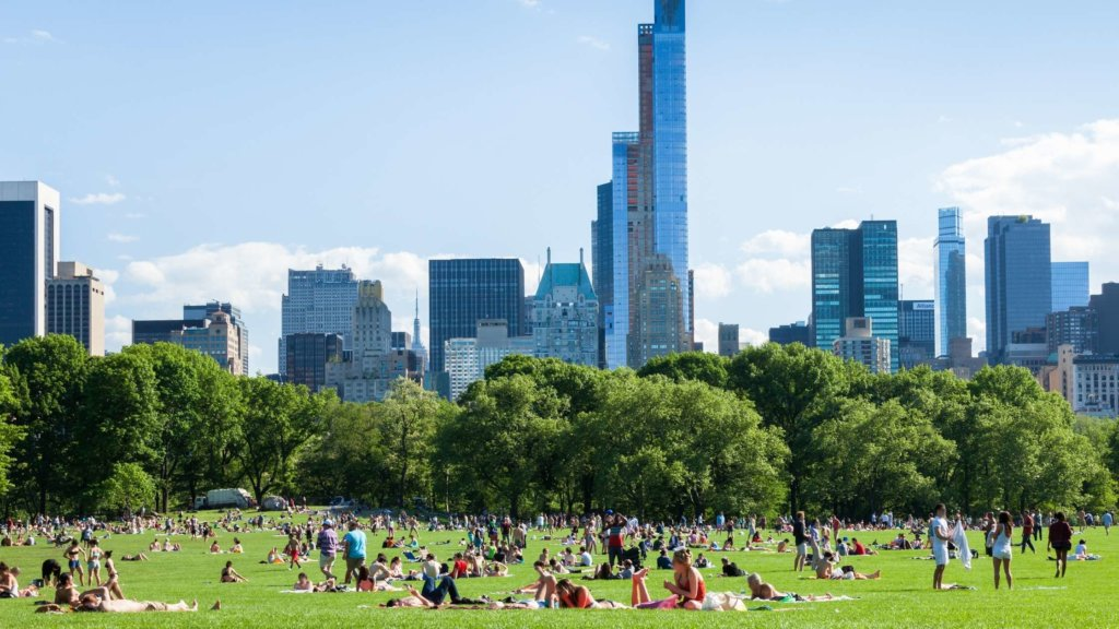 sunbathers on grass in central park
