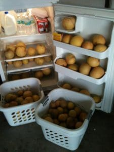 Grapefruits not lost to waste - Safe The Food at work