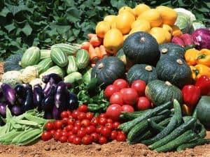 _vegetable-garden