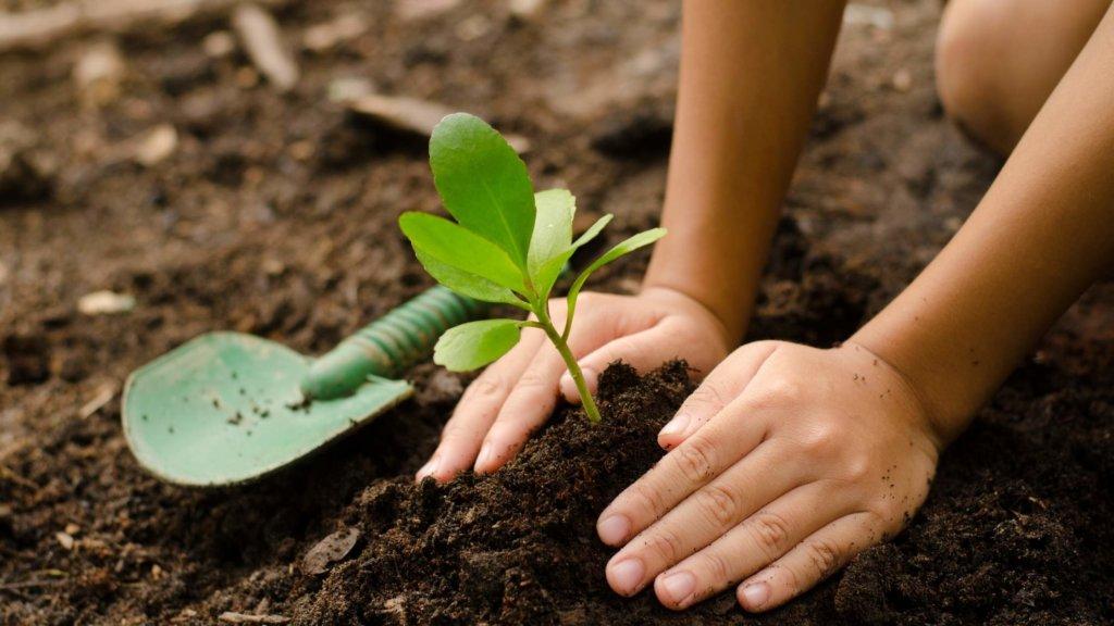 hands planting seedling in dirt