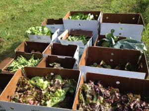 Garden Food Photo