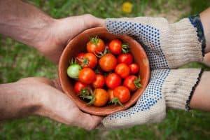 AmpleHarvest.org ending food waste