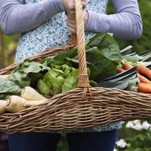 AmpleHarvest.org ending fresh food waste