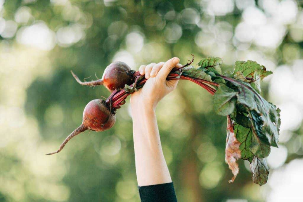 hand holding up two red beets