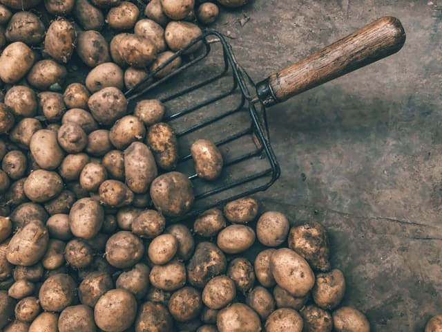 pile of potatoes and a pitchfork