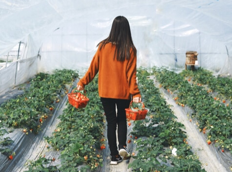 girl walking through strawberry patch holding two baskets of strawberries
