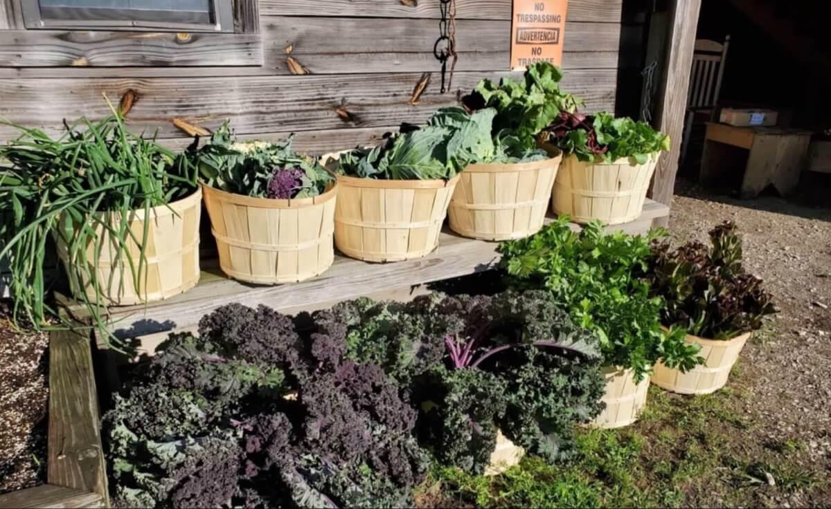 Bonne Plant's 2020 food pantry harvest