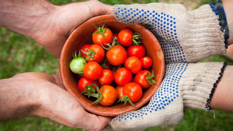 two pairs of hands holding bowl of tomatoes