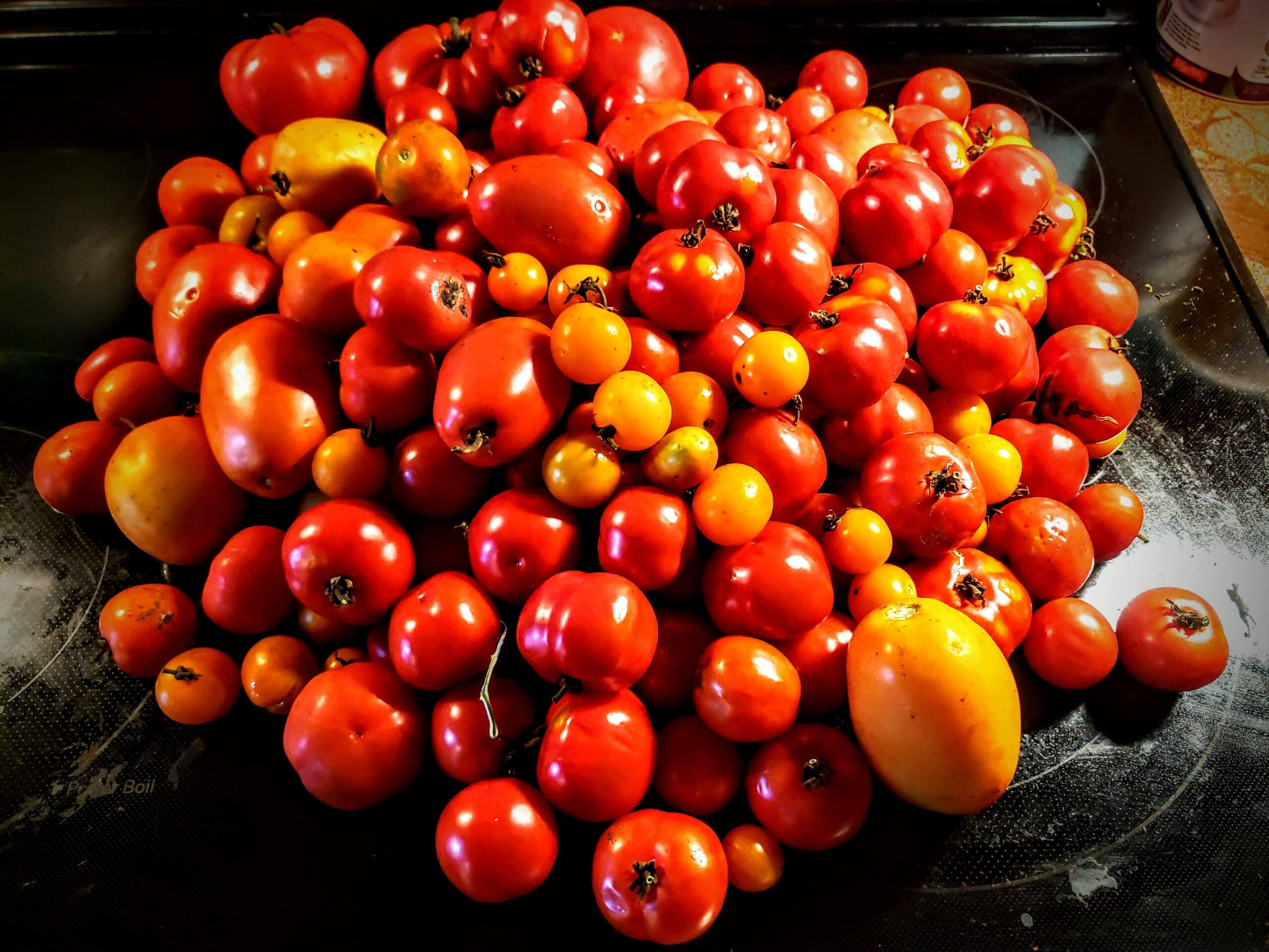 over 50 red tomatoes in a pile